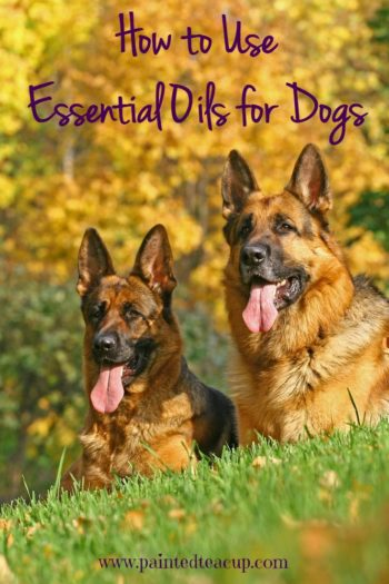 How to Use Essential Oils for Dogs. Learn how you can safely support your dog's health with essential oils!