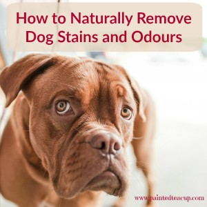 How to Naturally Remove Dog Stains and Odours. Easy recipes using the items in your home and also how to use essential oils for dog odours. www.paintedteacup.com