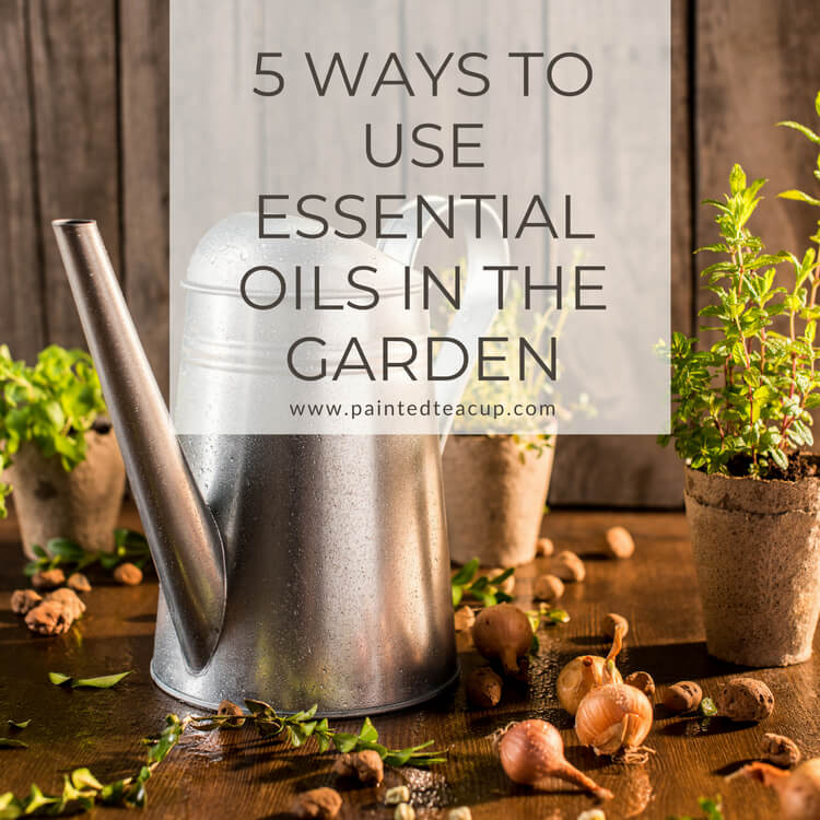 There are so many great ways to use essential oils in the garden! Learn about 5 great benefits, essential oils for pest control and practical uses!